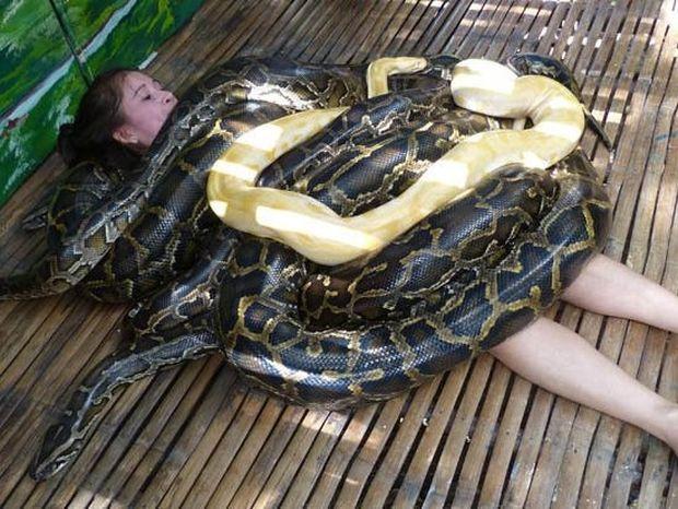 ΑΠΙΣΤΕΥΤΟ: Κάνουν μασάζ με φίδια!