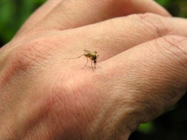 Πώς θα προστατευθείτε από τα κουνούπια με φυσικούς τρόπους