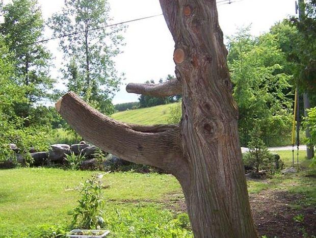 Αυτός ο άνθρωπος μετέτρεψε αυτό το κομμάτι του δέντρου σε κάτι πολύ μοναδικό