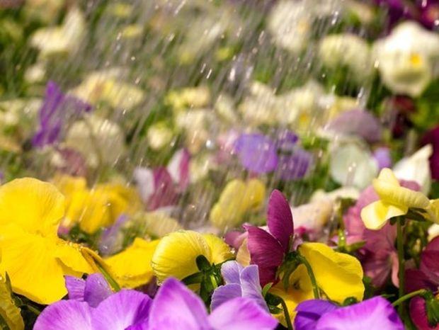 Τρόποι για να ποτίζονται τα φυτά σας στις διακοπές