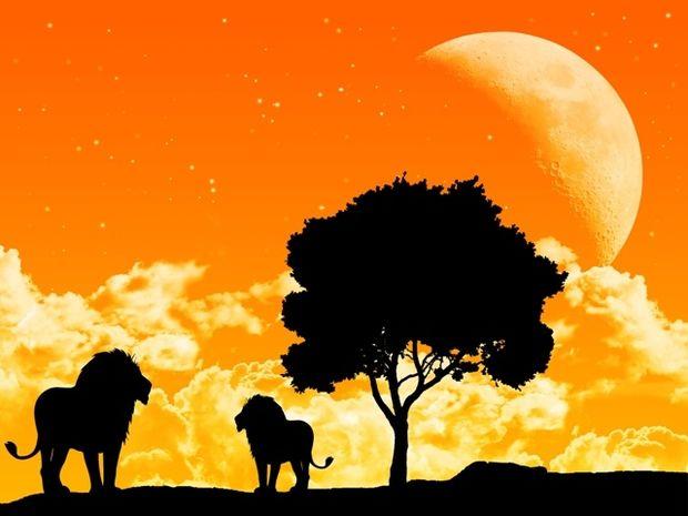 Νέα Σελήνη Ιουλίου 2014 στον Λέοντα: Πώς θα επηρεάσει τα 12 ζώδια