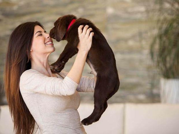 Σκύλος: Προστάτης και σύμβολο ευημερίας