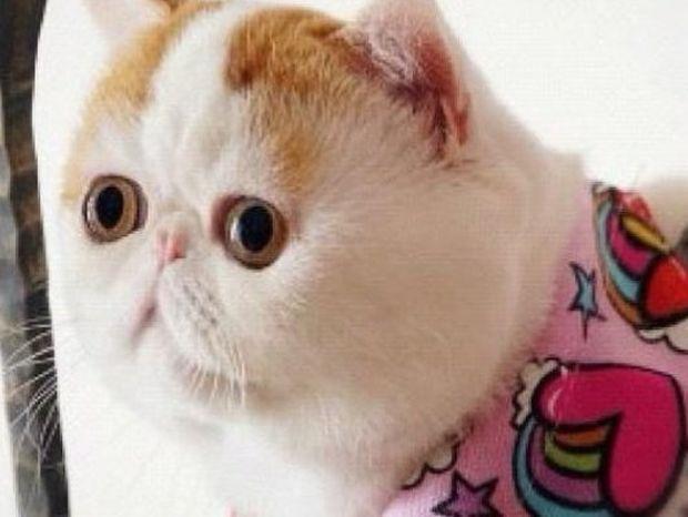 Αυτός είναι ο Σνούπι, ο γάτος που έχει τρελάνει το διαδίκτυο!