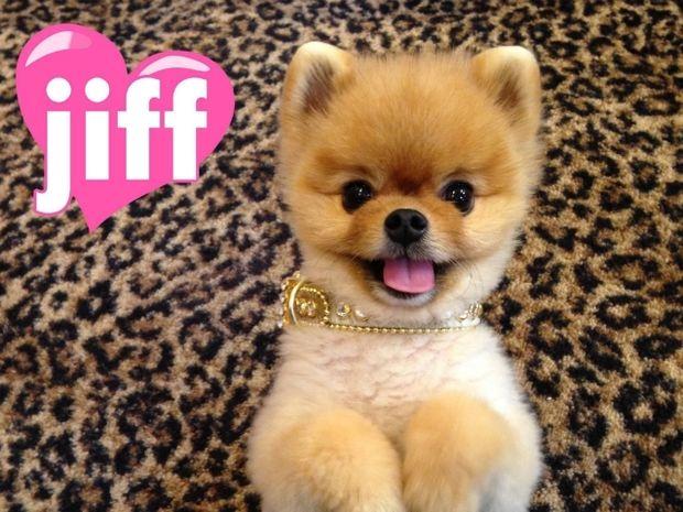 Για ποιο απίθανο λόγο μπήκε στα ρεκόρ Guinness αυτό το γλυκό σκυλάκι; (βίντεο)