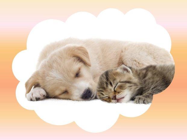 Οι συνήθειες ύπνου των ζωδίων