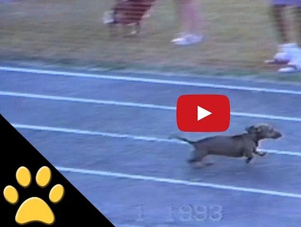 Ο πιο ζαβολιάρης σκύλος σε αγώνα ταχύτητας (Βίντεο)