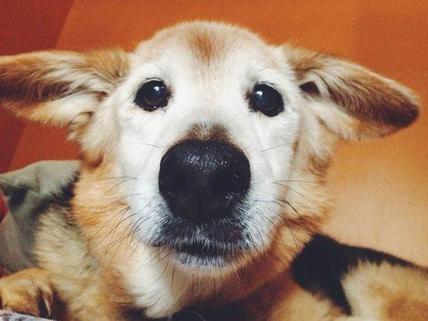 To φωτογραφικό αντίο της Maria Sharp στον σκύλο της Chubby