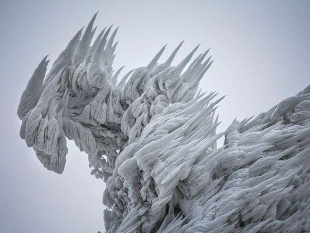 Χιονοθύελλα μετέτρεψε ένα ολόκληρο δάσος σε... γλυπτό από πάγο