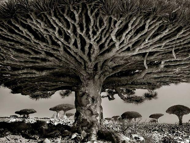 Δέντρα τόσο παλιά όσο και ο ίδιος ο κόσμος
