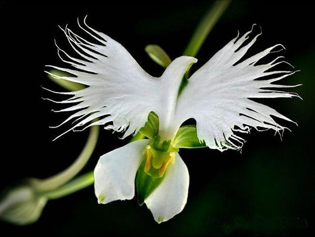 Πανέμορφα λουλούδια που μοιάζουν με... κάτι άλλο!