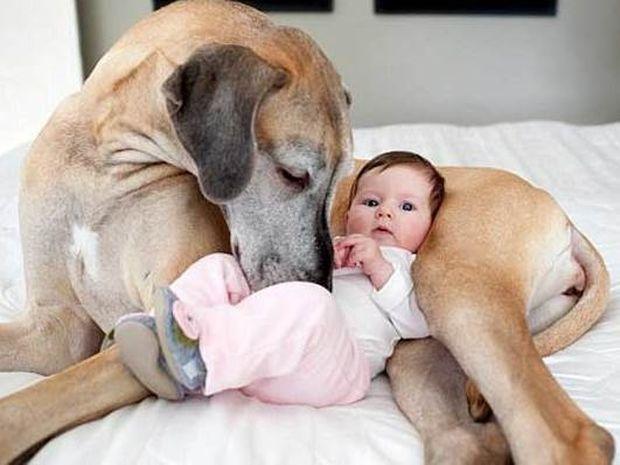 ΠΑΝΕΜΟΡΦΟ: Μωρά παίζουν με… μεγάλα σκυλιά! (video)