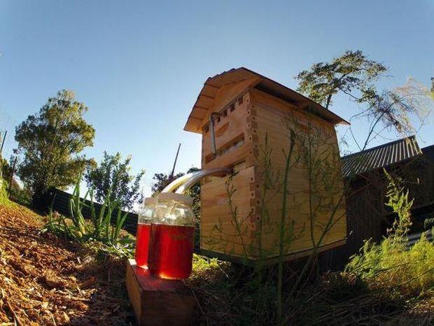 Μια νέα κυψέλη σας επιτρέπει να παίρνετε το μέλι χωρίς να ενοχλείτε τις μέλισσες