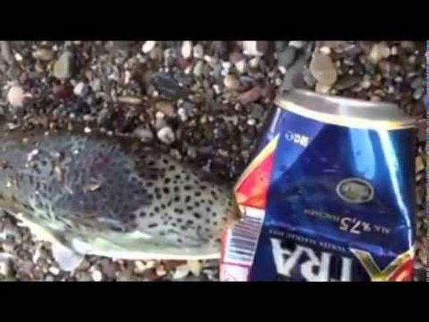 Προσοχή: Το ψάρι που μπορεί να σε... σκοτώσει αν βρεθεί στο πιάτο σου (video)
