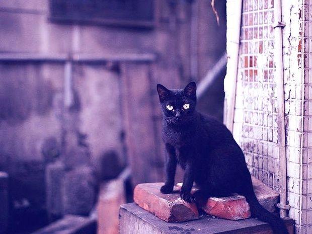 Μαύρη γάτα: προλήψεις και δεισιδαιμονίες
