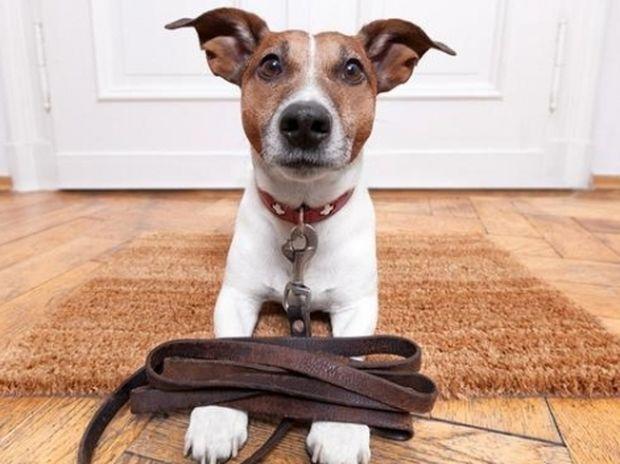 Δείτε την αντίδραση αυτών των σκύλων μόλις ακούν ότι θα πάνε βόλτα! (βίντεο)