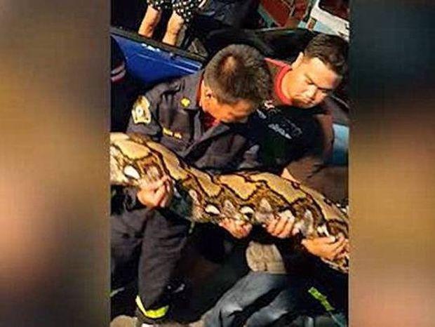 Απόλυτος τρόμος σε εστιατόριο: Βρήκαν γιγάντιο φίδι