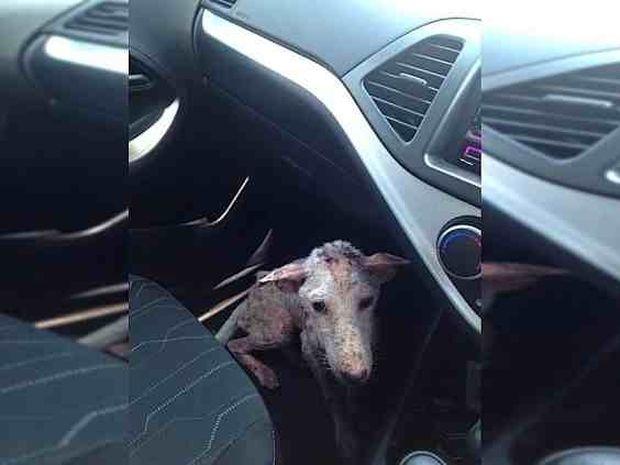Σταμάτησαν να βοηθήσουν αυτό το σκυλάκι αλλά κάτι απροσδόκητο συνέβη (photos)