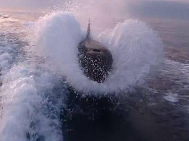 Μη σου τύχει... 30 όρκες κυνηγούν αλιευτικό (video)