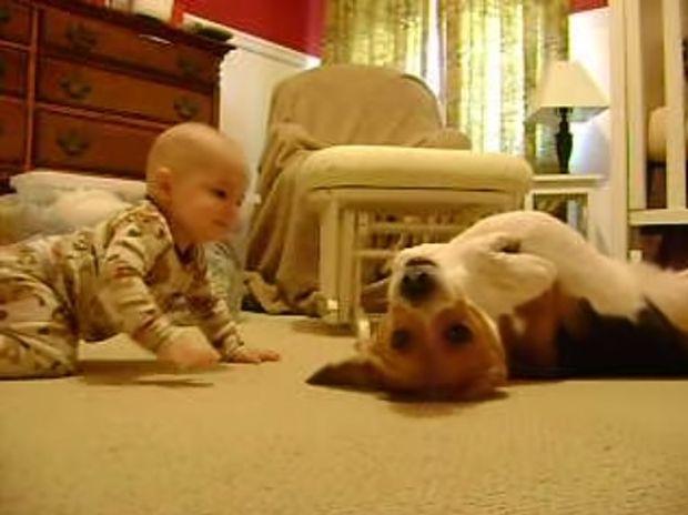 Απίθανο! Το μωράκι συναντά για πρώτη φορά αυτό το σκύλο και δε φαντάζεστε τις αντιδράσεις τους! (video)