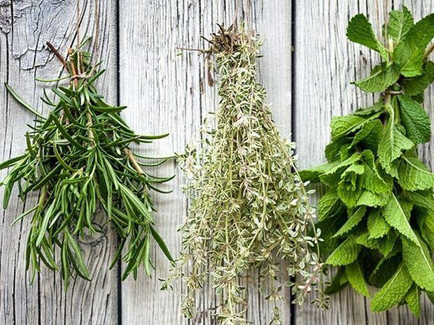 Βότανα: Αναλυτική λίστα με τις θεραπευτικές ιδιότητές τους