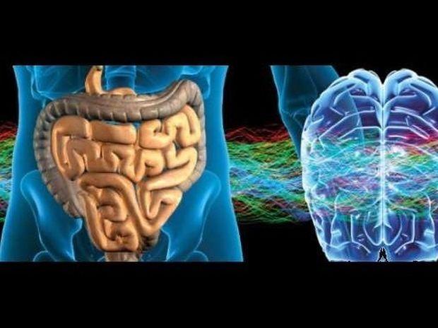 Η επικοινωνία του εγκεφάλου με το έντερο