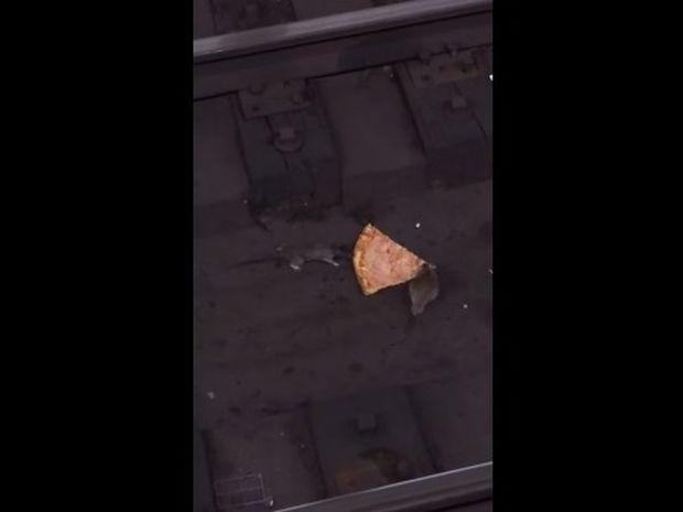 Ποντικοκαυγάς για ένα κομμάτι πίτσα! Κι όμως και τα ποντίκια μπορούν να γίνουν αξιολάτρευτα! (video)