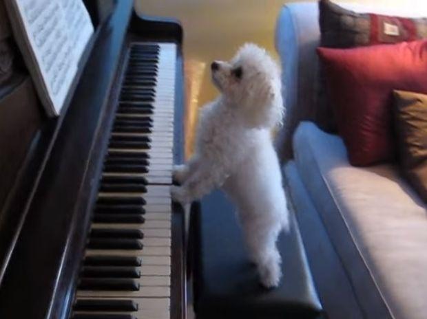 Ρεσιτάλ πιάνου από τον πιο απίστευτο πιανίστα! (video)