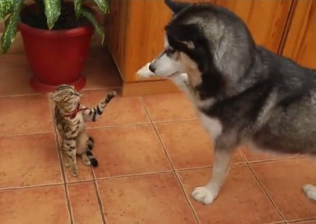 Δείτε τι απίστευτο κάνει αυτός ο σκύλος για να ενθαρρύνει τον φίλο του να παίξουν (video)