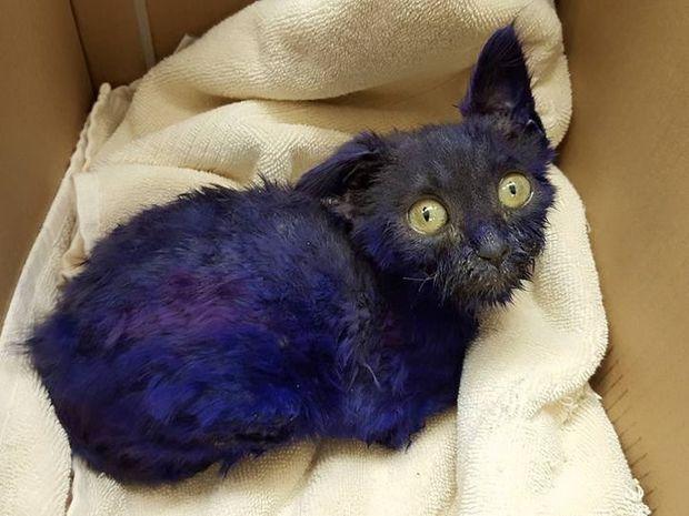 Συγκινητικό! Αυτό το μωβ γατάκι δεν το έβαλε κάτω παρά τα βασανιστήρια που πέρασε! (photos+video)