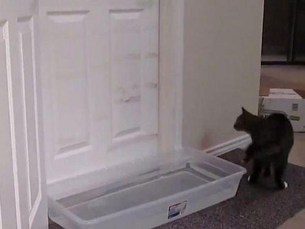 Έβαλαν λεκάνη με νερό για να μην ανοίγει τις πόρτες ο γάτος τους! Δε φαντάζεστε τι συνέβη! (video)