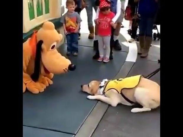 Δείτε την απίστευτη αντίδραση του σκυλάκου όταν συναντάει τον Πλούτο στην Ντίσνεϋλαντ! (video)