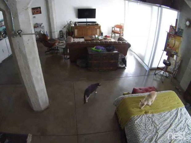 Απίστευτο! Δείτε τι κάνει αυτή η γάτα για να σωπάσει ο σκύλος όταν λείπει ο ιδιοκτήτης! (video)
