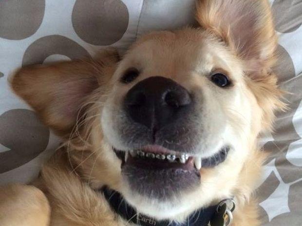 Αυτός ο σκυλάκος με τα σιδεράκια στα δόντια θα σας κλέψει την καρδιά! (photos)