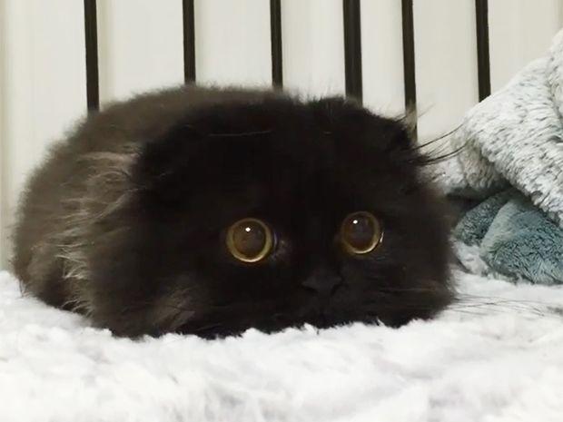 Αυτό το πανέμορφο γατάκι θα σας μαγέψει με τα τεράστια μάτια του! (photos)