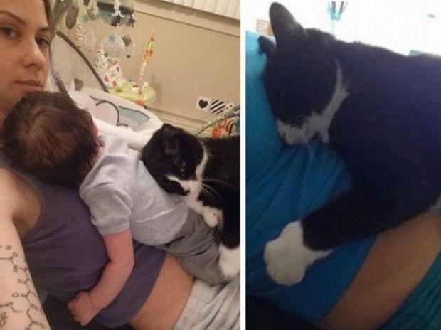 Δείτε το απίστευτο δέσιμο της γάτας με το μωράκι απ' όταν ήταν ακόμα στην κοιλιά! (photos)