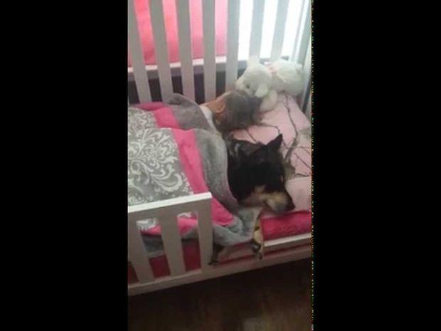 Έψαχνε τον σκύλο παντού, ενώ εκείνος κοιμόταν στην κούνια του μωρού! (video)