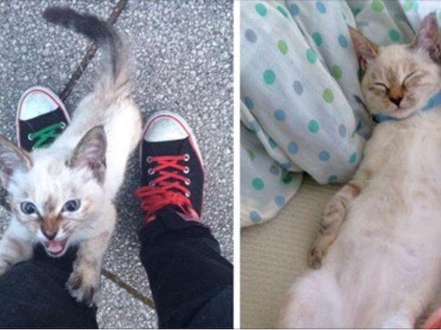 Η γάτα τον επέλεξε για αφεντικό στο πάρκο και δεν τον άφηνε να φύγει χωρίς αυτήν! (photos)
