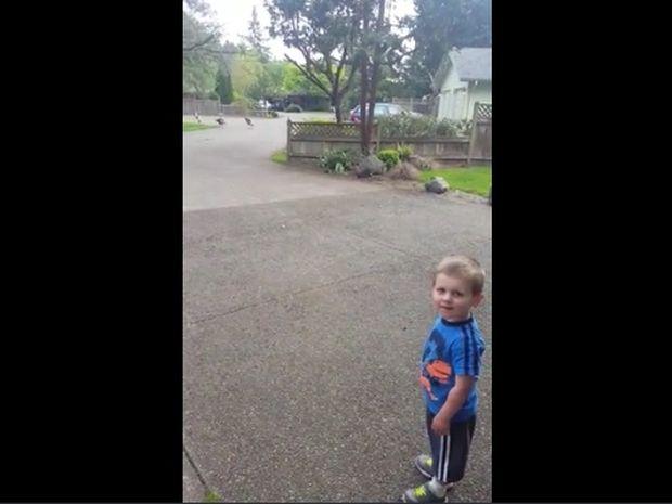 Θα λυθείτε στα γέλια! Ο μπόμπιρας πιάνει συζήτηση με τις γαλοπούλες! (video)