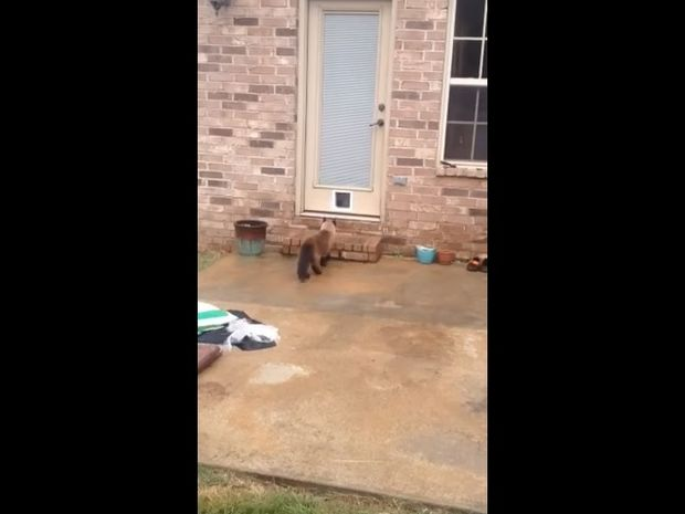 Επί δύο ώρες έφτιαχνε πορτάκι για τη γάτα του, αλλά αυτή είχε άλλα σχέδια… (video)