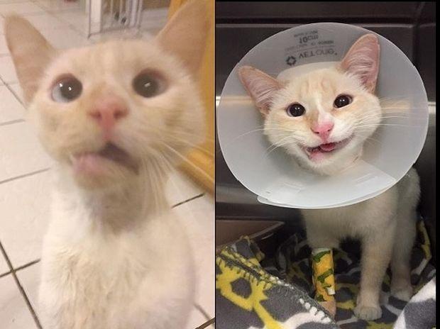 Έσωσαν τη ζωή της γάτας και μετέτρεψαν το σπασμένο της σαγόνι σε όμορφο χαμόγελο! (photos)