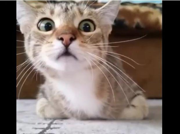 Ξεκαρδιστικό! Δείτε τη γάτα που παρακολουθεί ταινία θρίλερ! (video)