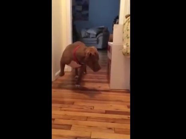 Ο σκύλος περπατάει στις μύτες των ποδιών του για να μην ξυπνήσει τη γάτα! (video)