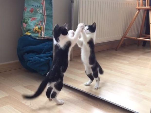 Το γατάκι βλέπει καθρέφτη για πρώτη φορά και τα βάζει με τον εαυτό του! (video)