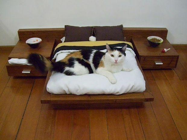 Αυτές οι γάτες είναι πραγματικά κακομαθημένες! (photos)
