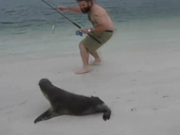 Επικό! Η φώκια κυνηγάει τον άνθρωπο για να του φάει το ψάρι! (video)