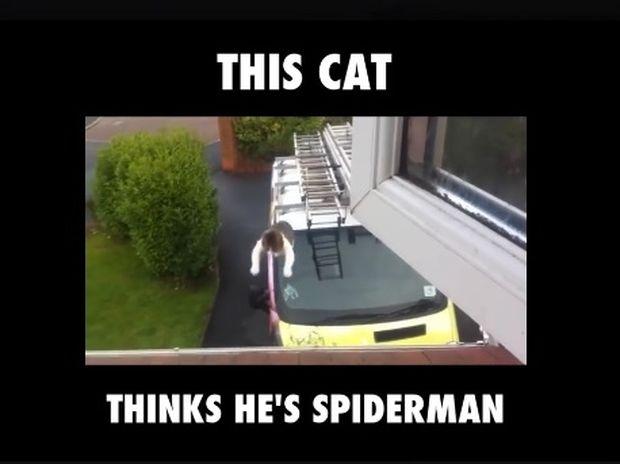 Η γάτα που πιστεύει πως είναι ο Spiderman! (video)