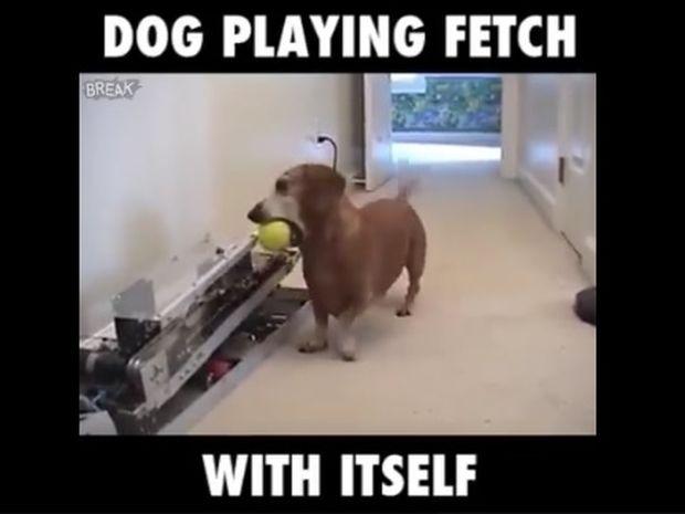 Ο σκύλος παίζει μόνος του το «φέρε το μπαλάκι»! (video)