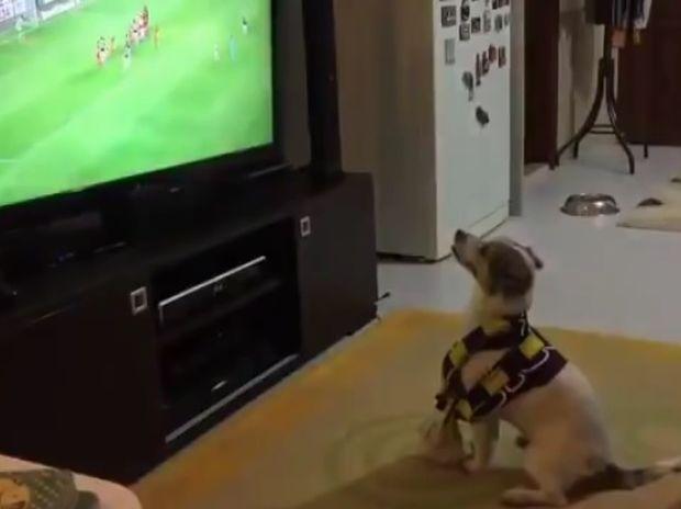Ο σκυλάκος πανηγυρίζει τα γκολ της αγαπημένης του ομάδας! (video)