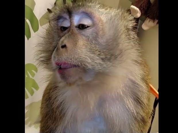 Η μαϊμού τρελαίνεται για περιποίηση ομορφιάς! (video)