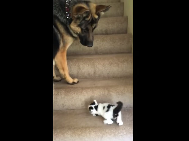 Ο σκυλάκος που βοηθάει το γατάκι να ανέβει τις σκάλες είναι ό,τι πιο γλυκό θα δείτε σήμερα! (video)